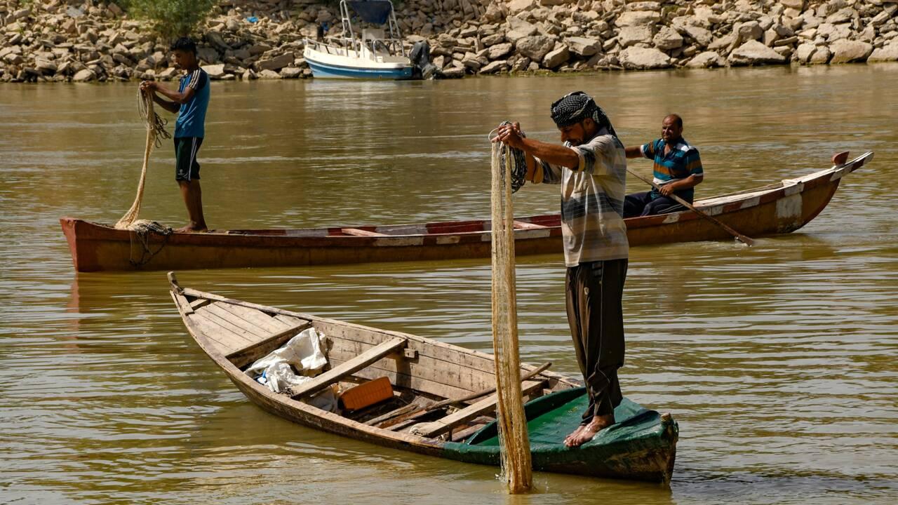 """En Irak, la """"fleur du Nil"""" tue fleuves, poissons et toute une économie"""