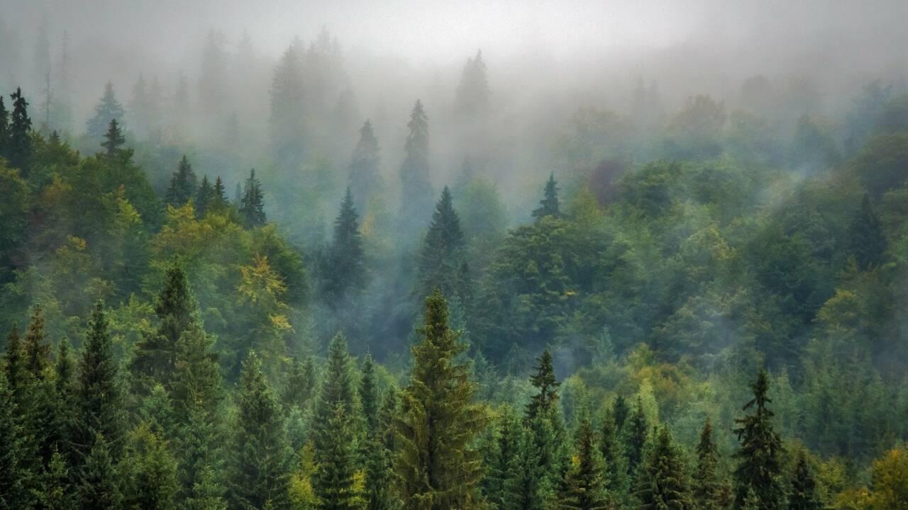 Pourquoi planter des arbres à grande échelle pourrait être contre-productif pour l'environnement