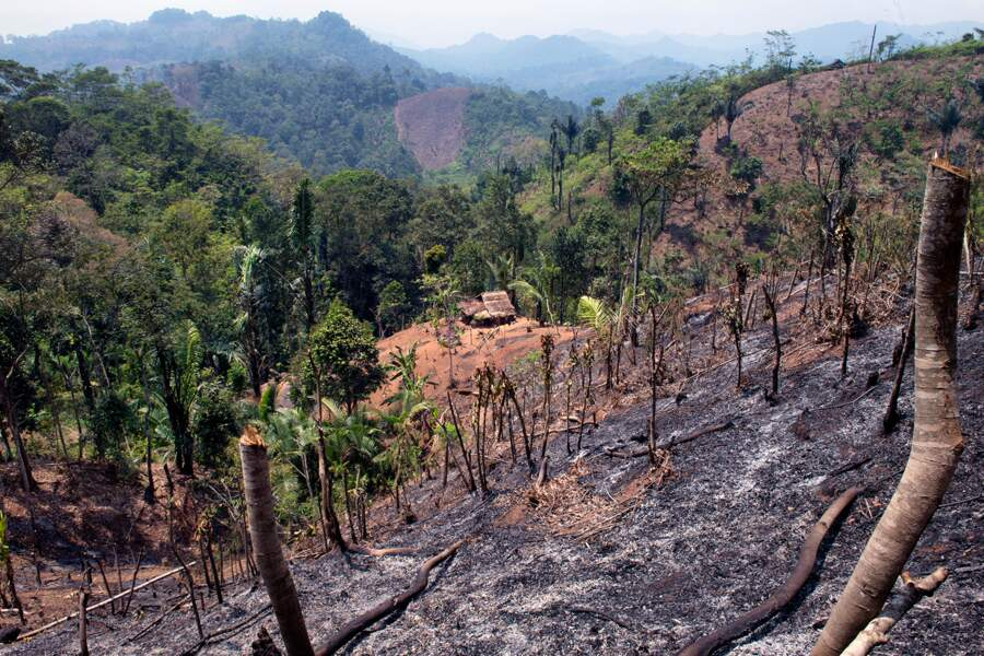 Les Baduy pratiquent une culture itinérante sur brûlis