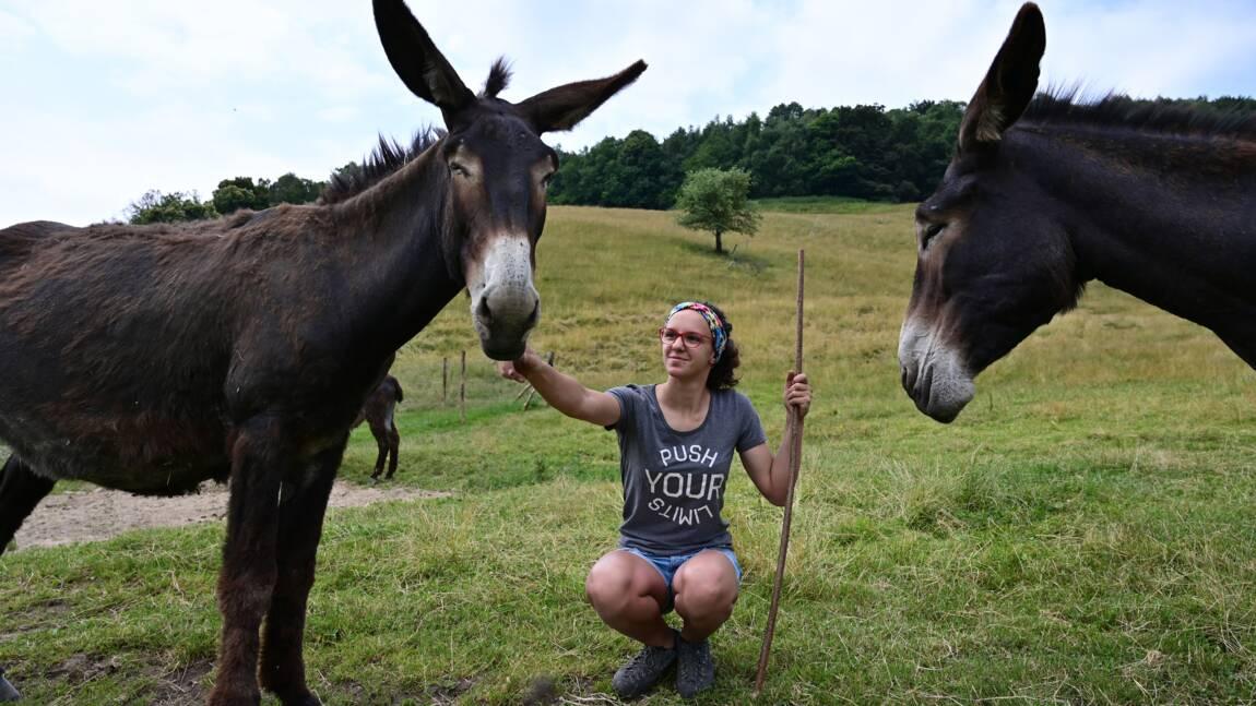 Elever des ânes en montagne, le défi d'une jeune Italienne