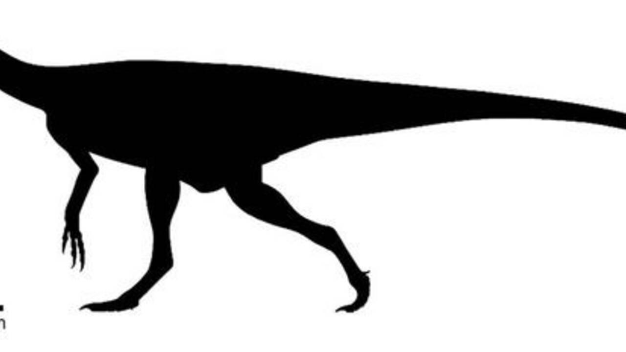 Un ancêtre des dinosaures pas plus grand qu'une tasse à café découvert à Madagascar
