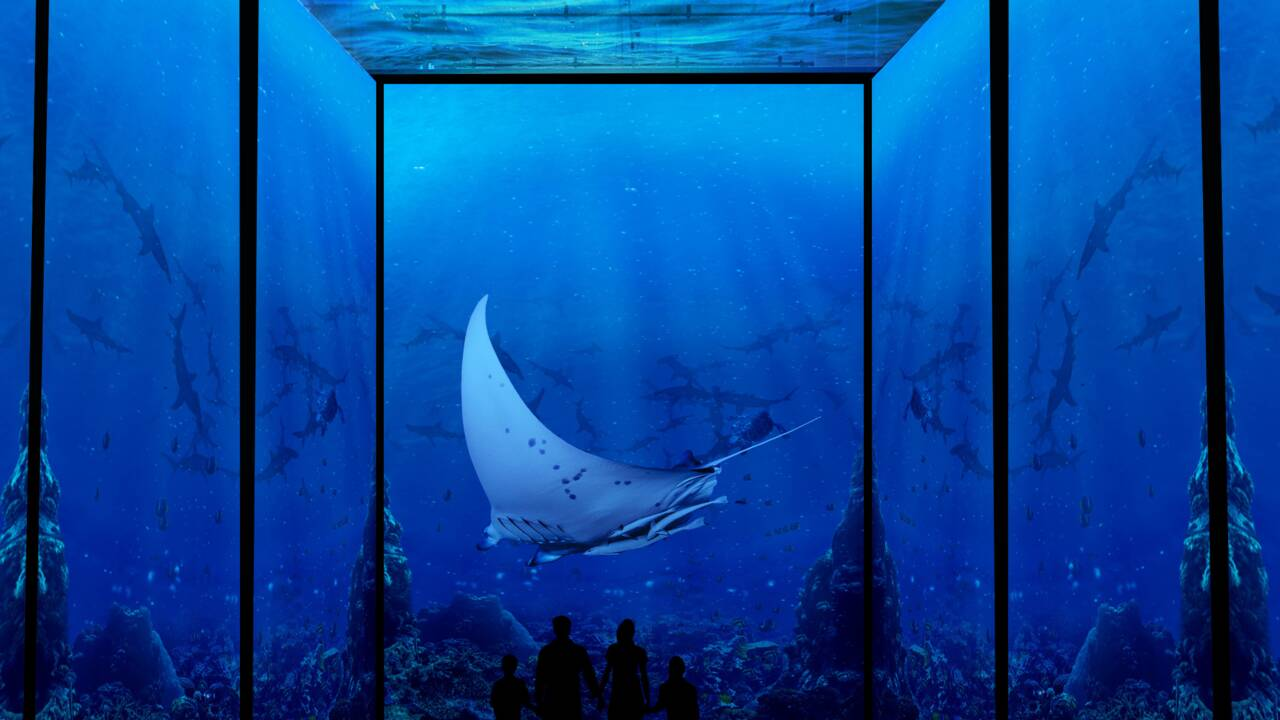 """Le Musée océanographique de Monaco propose de """"plonger"""" en immersion sur la Grande Barrière de corail"""