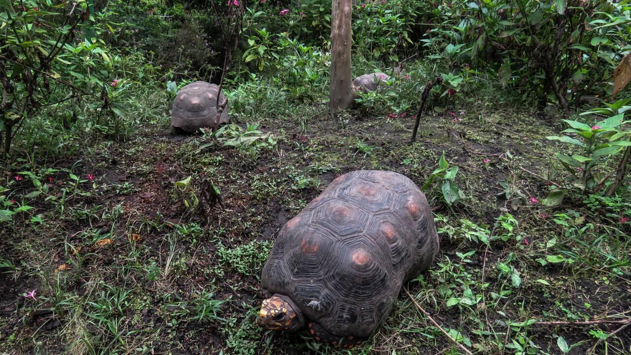 Colombie: un botaniste confiné par la pandémie dans son jardin tropical