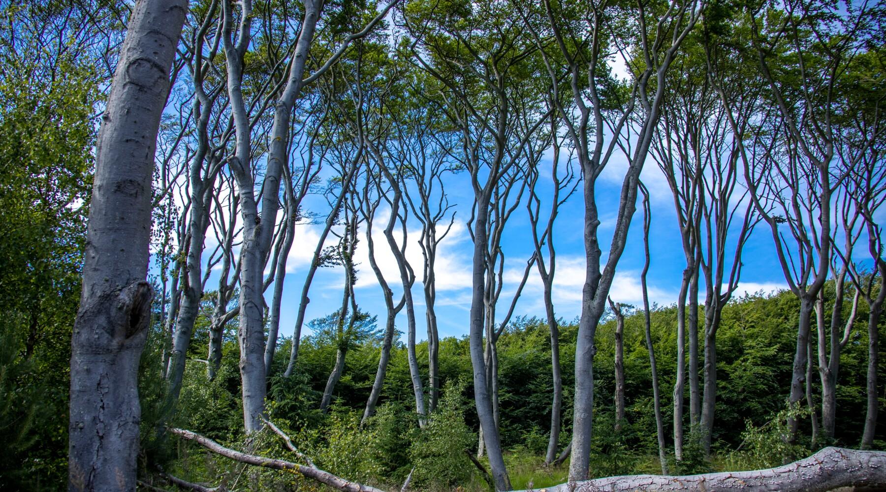 Les arbres, ces géants qui nous veulent du bien