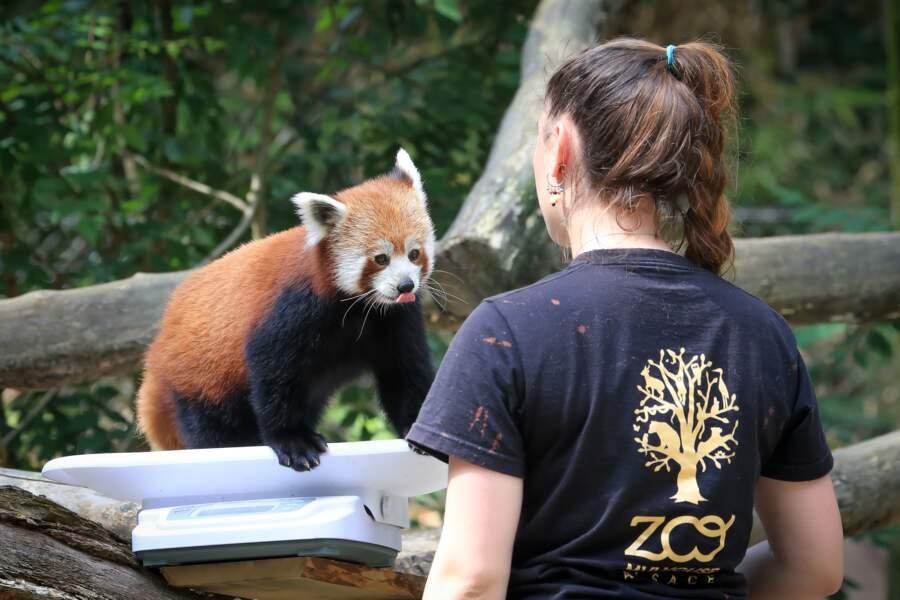 Le zoo de Mulhouse