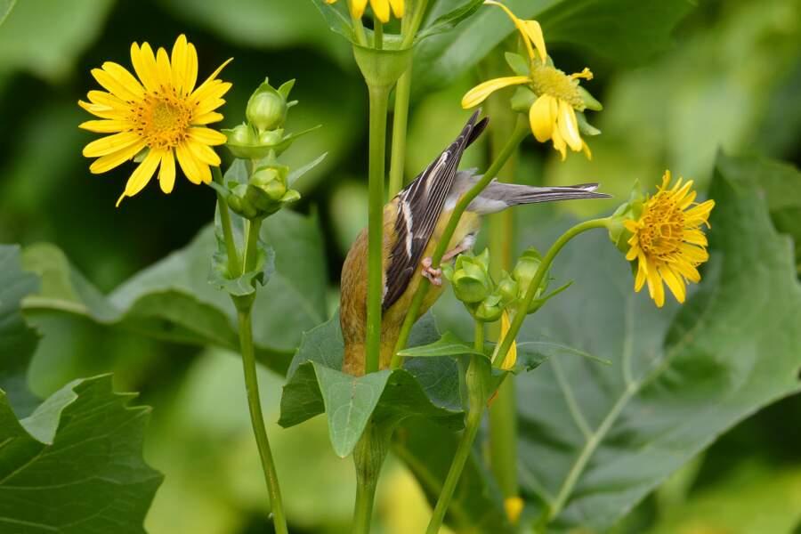Des plantes et des oiseaux
