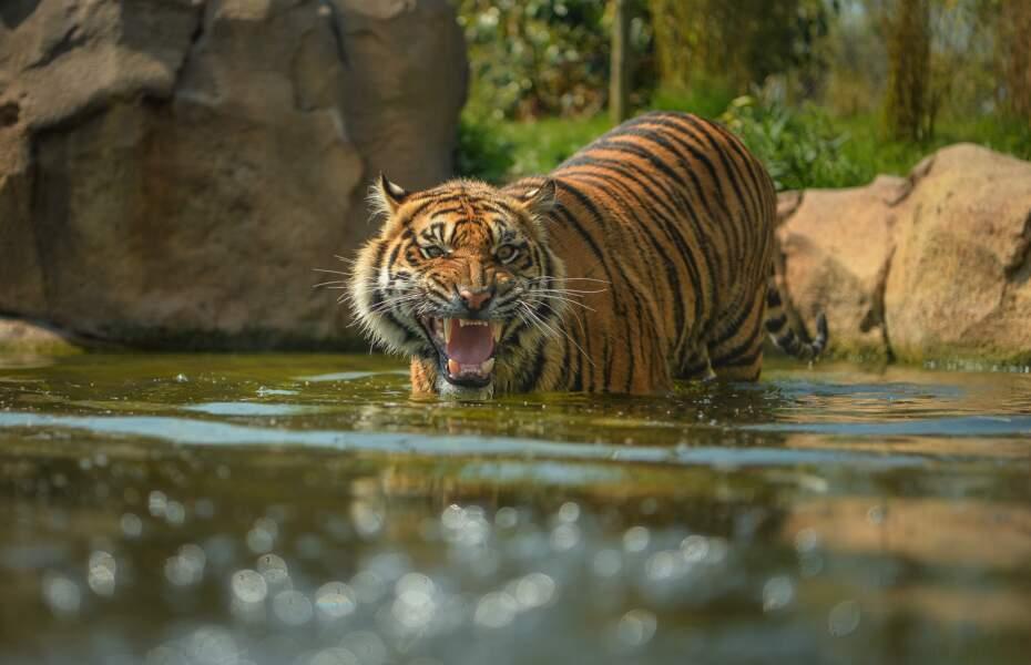 Le Zoo de Chester, Angleterre