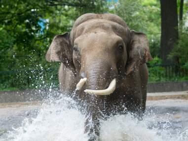 Les plus beaux zoos d'Europe