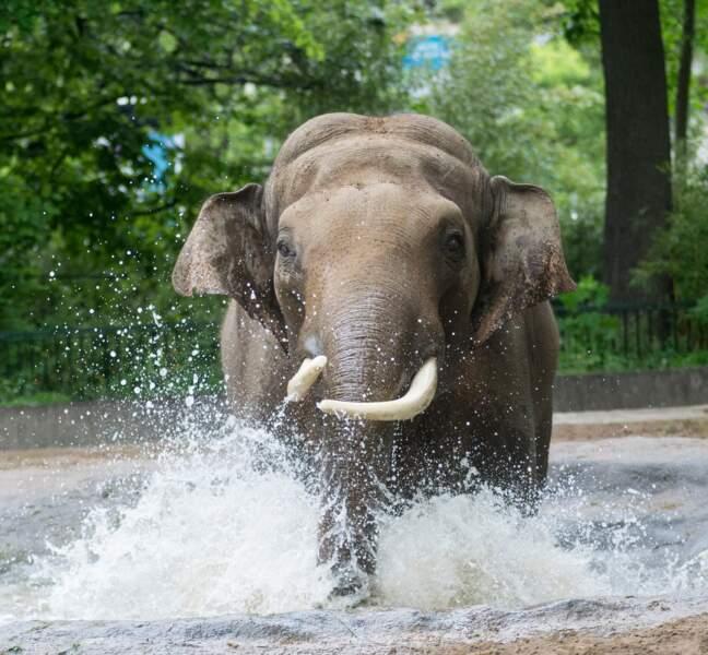 Le Zoo de Berlin, Allemagne