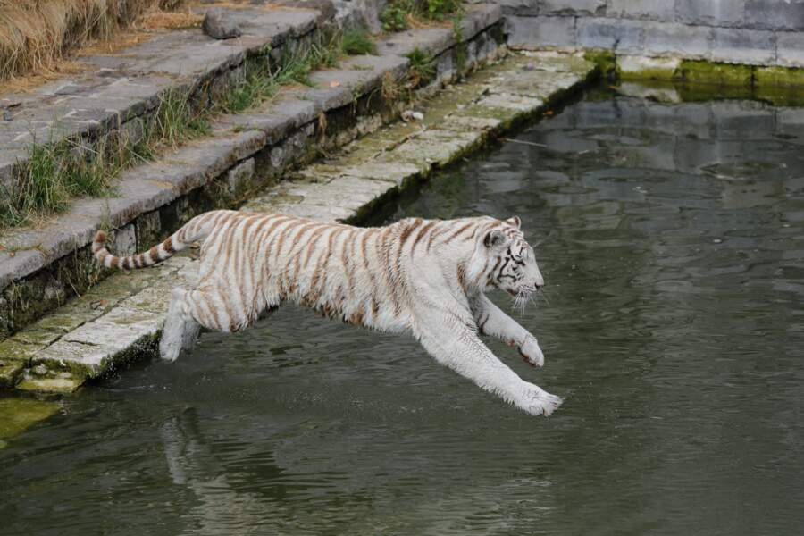Pairi Daiza Zoo, Belgique