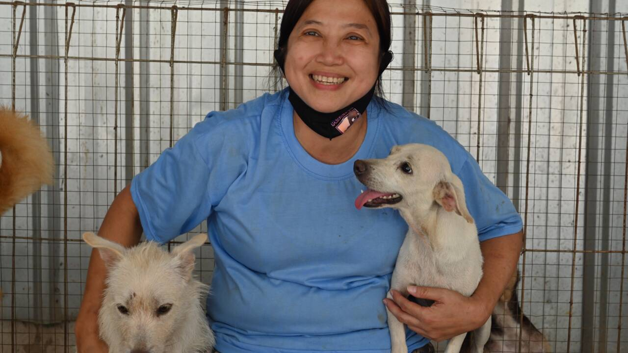 Le docteur indonésien qui sauve les chiens victimes de la pandémie