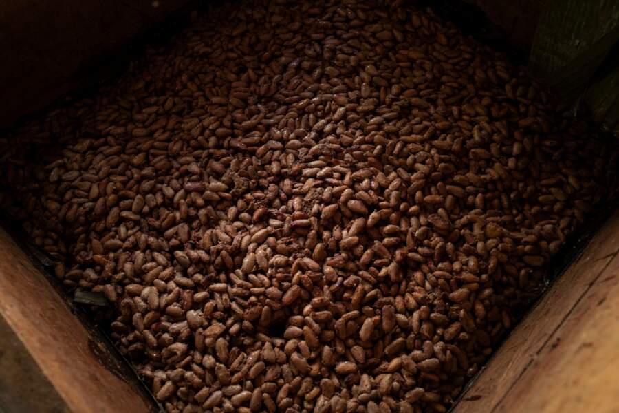 Un cacao de très haute qualité