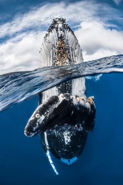 Les merveilles sous-marines dans l'objectif d'un photographe
