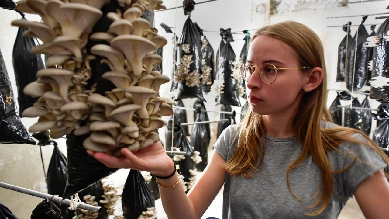 Des champignons cultivés sur du marc de café, une autre façon de voir l'avenir