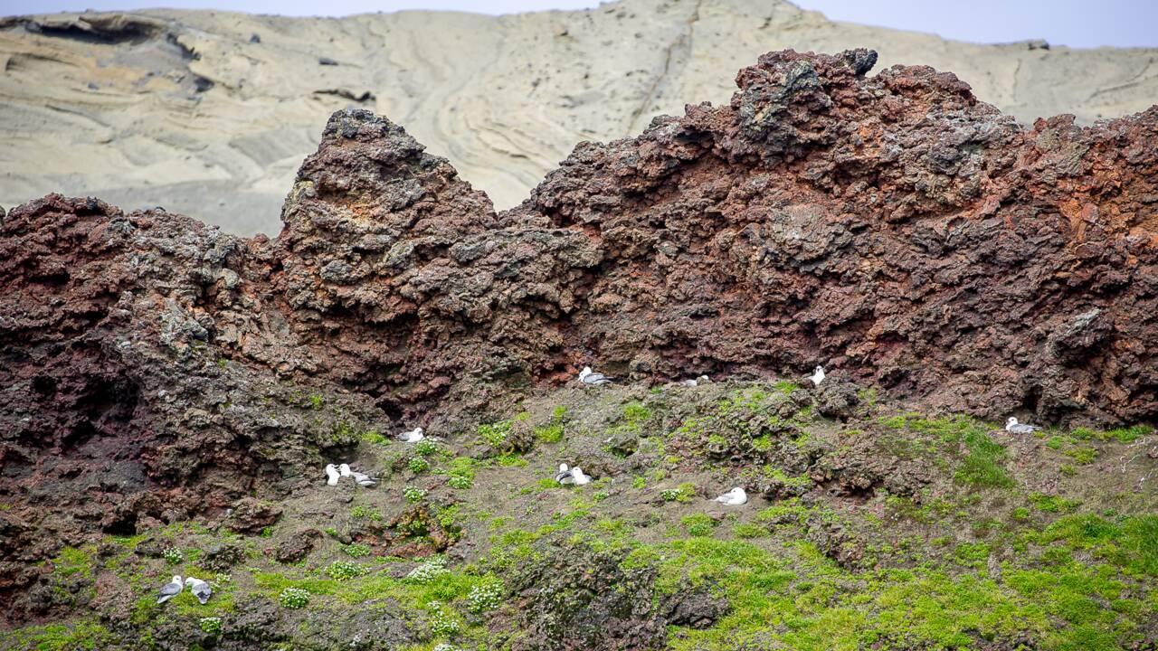 Islande : sur l'île de Surtsey, on a marché sur le volcan interdit