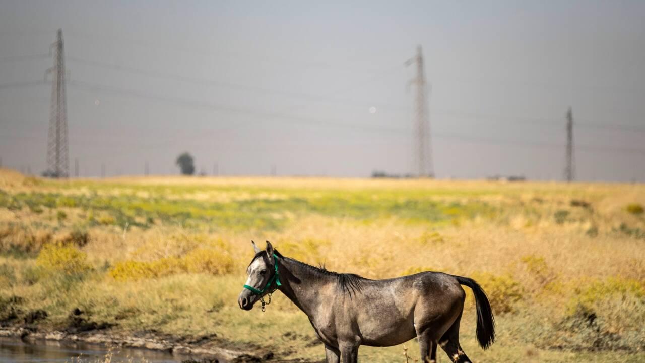 En Syrie, cheptel et terrains agricoles souffrent des fuites de pétrole