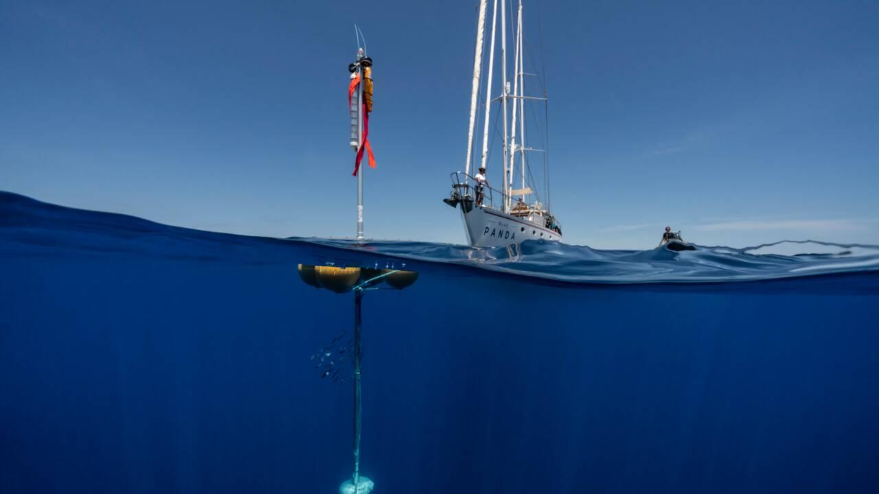Ce que l'on sait de la baleine amputée de sa queue qui agonise en Méditerranée