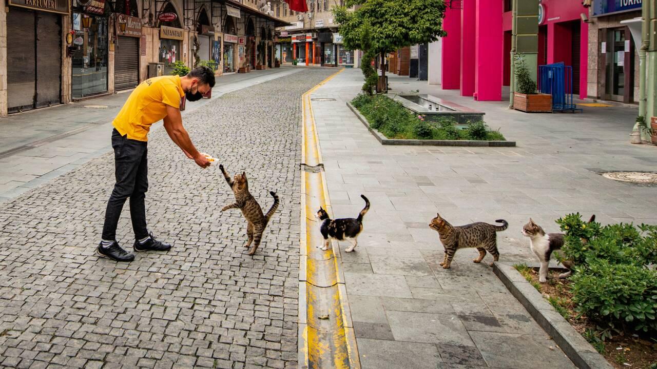 Contre l'abandon des animaux de compagnie : 10 photos poilantes en lice pour les Comedy Pet Awards 2020