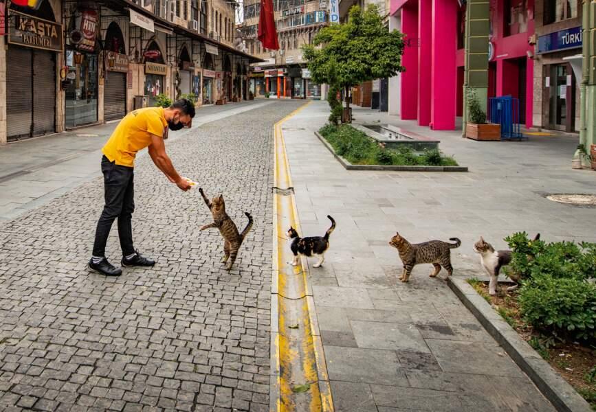 Dans la province turque d'Hatay, la distanciation sociale vaut aussi pour les félins