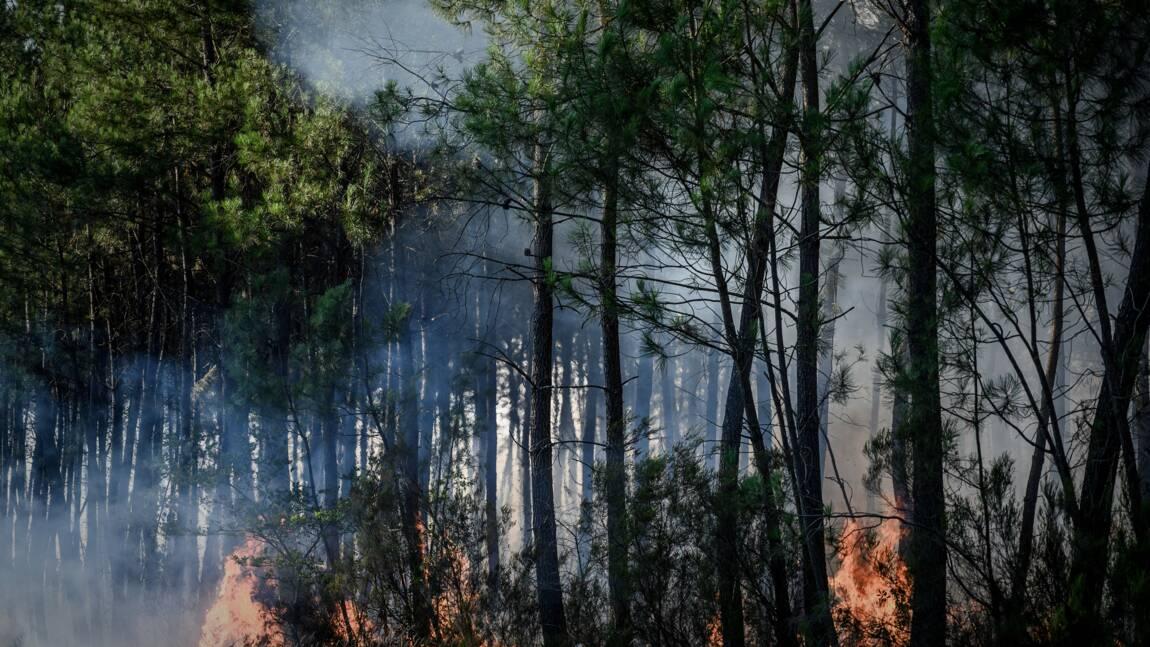 Premiers feux de l'été: plus de 500 hectares de forêt ravagés en Gironde et Loiret