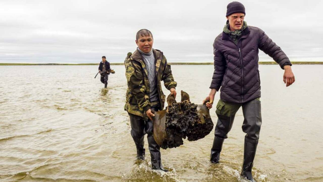 Sibérie : un squelette de mammouth parfaitement conservé découvert dans un lac