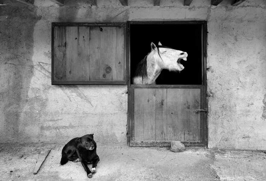 Cheval de trait... d'humour, dans la province d'Hatay, en Turquie