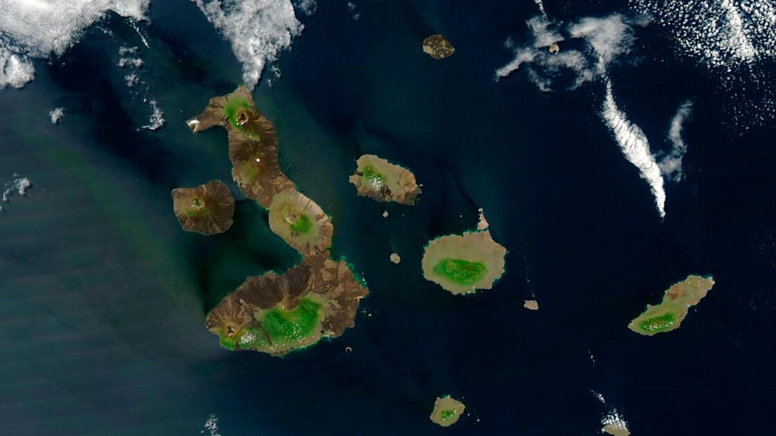 """Flotte de pêche près des Galápagos : l'Equateur exprime son """"malaise"""" à la Chine"""