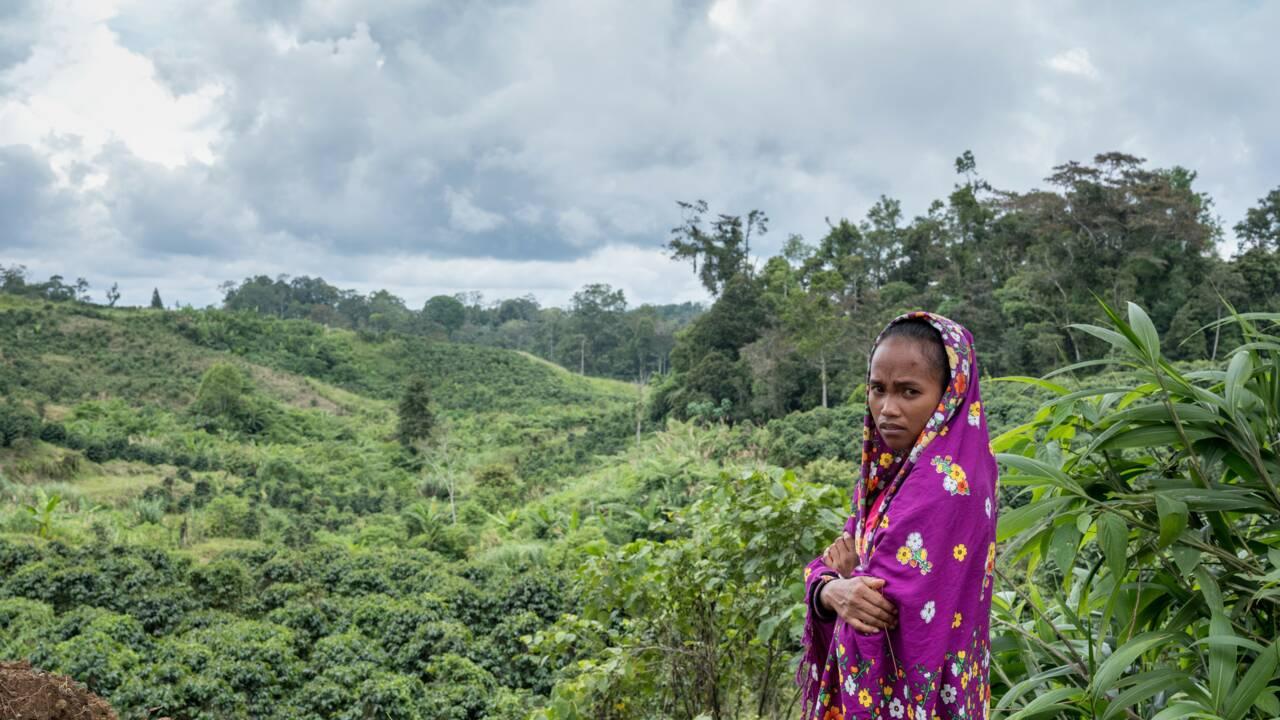 212 défenseurs de l'environnement tués en 2019, le bilan le plus lourd jamais enregistré