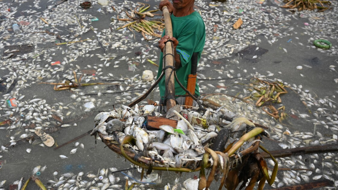 Les Philippines, pays le plus dangereux d'Asie pour les défenseurs de l'environnement