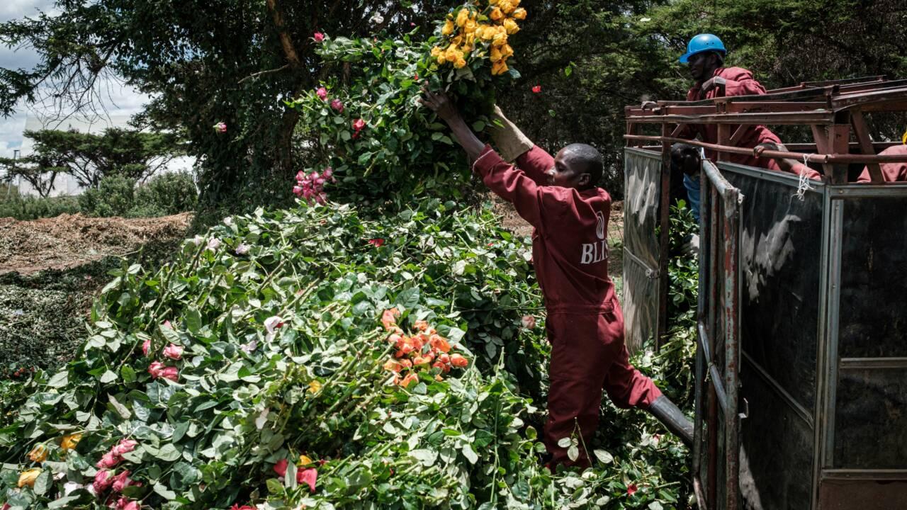 Dans un marché ultra-mondialisé, la fleur veut se relocaliser chez elle