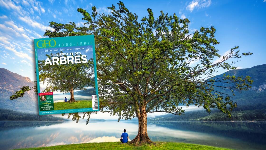 Les bienfaits des arbres au sommaire du nouveau hors-série GEO