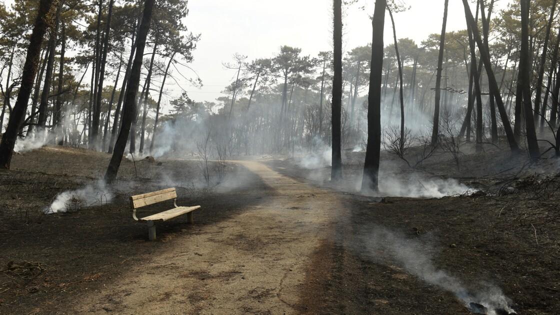 "Incendie d'Anglet: feu ""d'origine humaine"", selon les premières constatations"