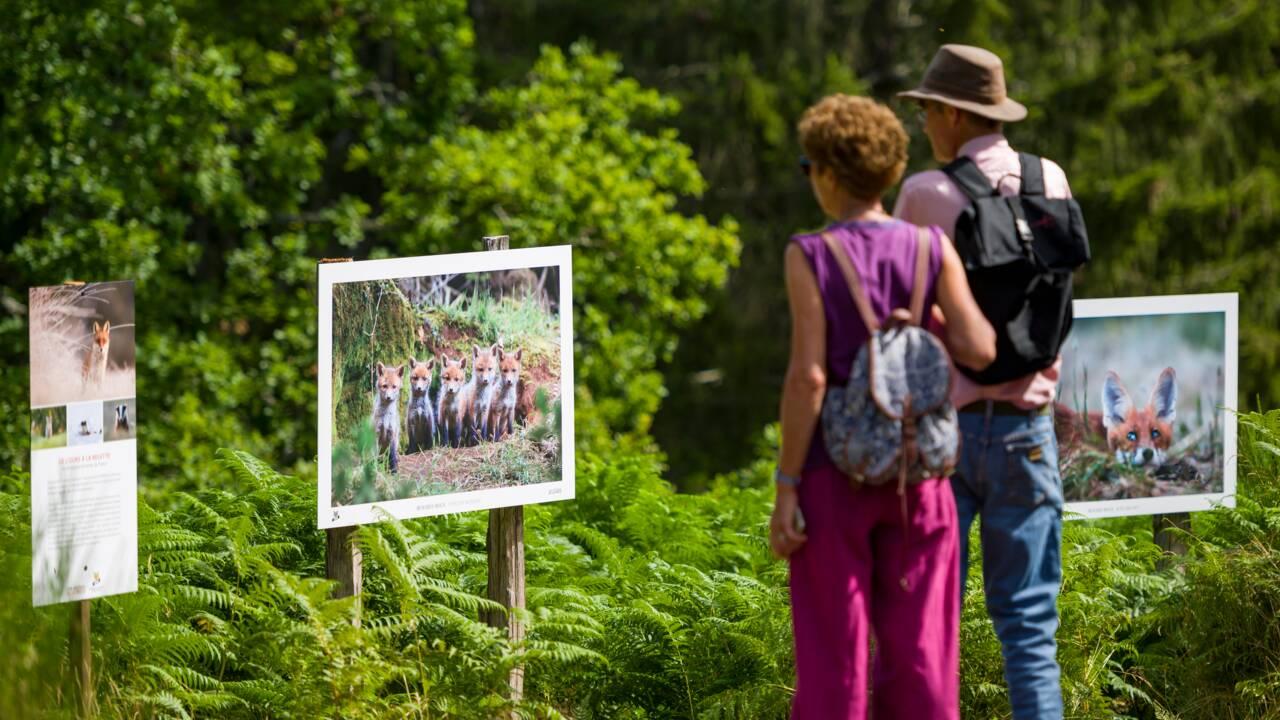 Une exposition dans les Vosges pour changer de regard sur la faune