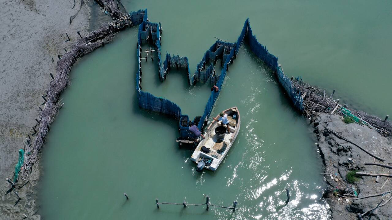 Le crabe bleu, bête noire des pêcheurs albanais