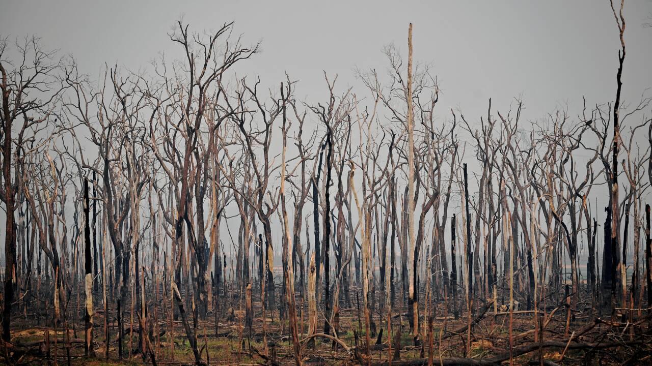 Amazonie brésilienne: très forte augmentation des incendies en juillet