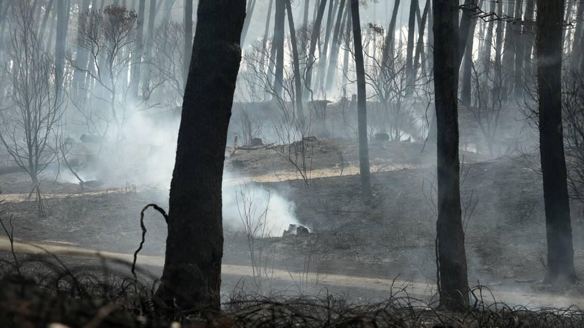 Feu de forêt maîtrisé à Anglet, 165 hectares détruits, enquête ouverte