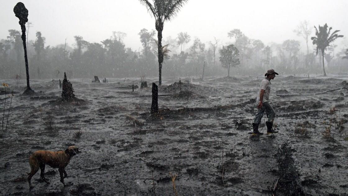 L'agriculture intensive augmente les risques de pandémie