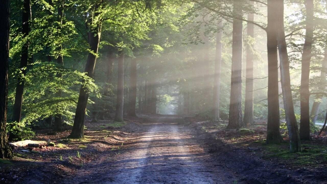 Comment fabriquer un sifflet de survie dans les bois