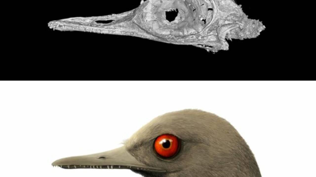 Le minuscule dinosaure vieux de 99 millions d'années serait en réalité un lézard