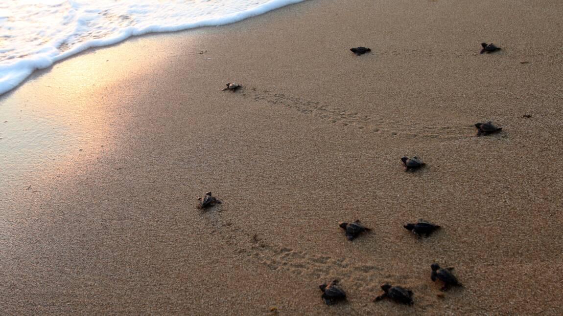 Les canicules marines peuvent déplacer les espèces de milliers de kilomètres