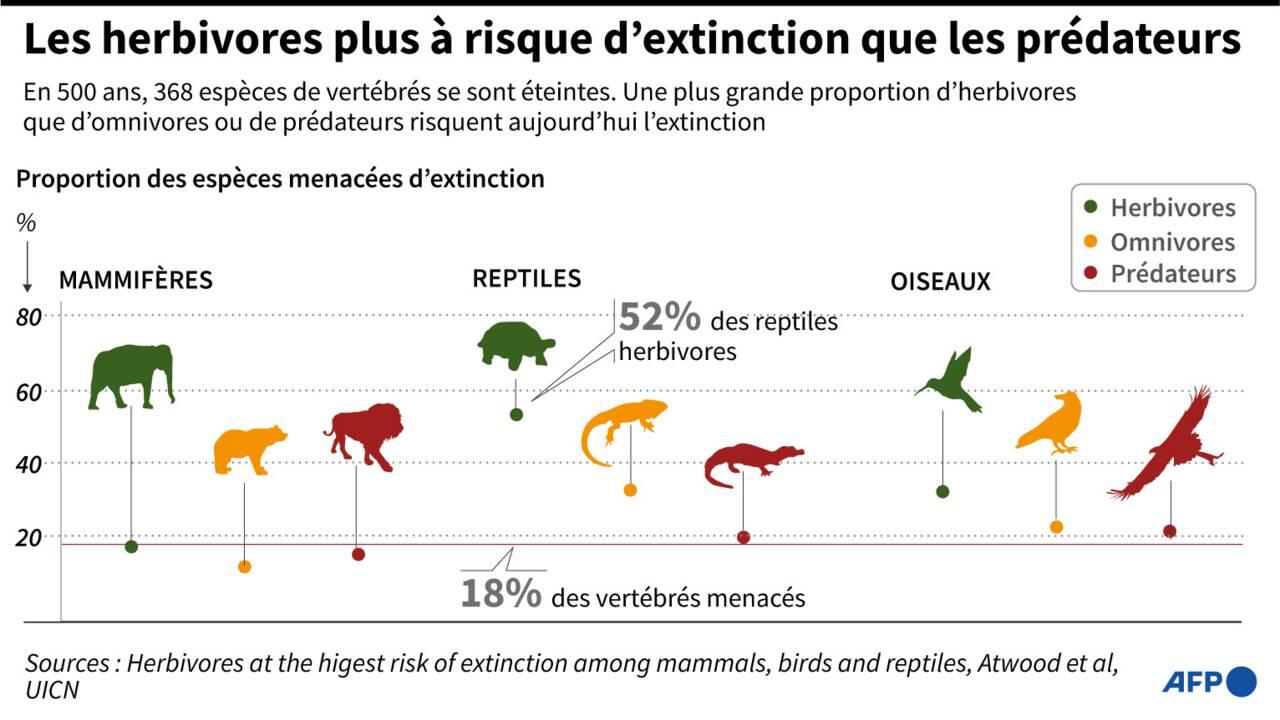 Les herbivores sont plus à risque d'extinction que les prédateurs