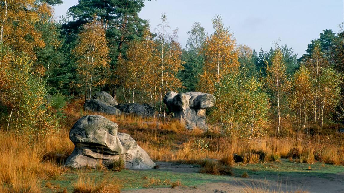 En forêt de Fontainebleau, à la découverte d'un vaste site d'art rupestre méconnu