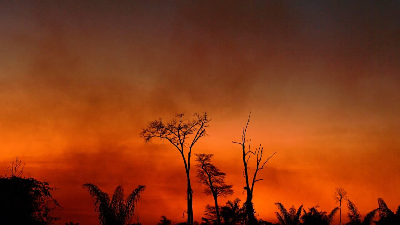 Brésil: plus de 1.600 km2 déboisés en Amazonie en juillet