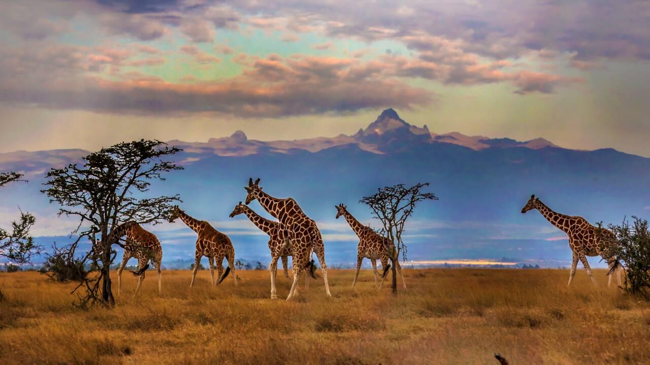 Coronavirus : le Kenya est prêt pour le retour des touristes