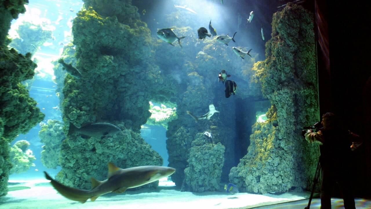 A Monaco, une plongée virtuelle saisissante dans les récifs coralliens d'Australie