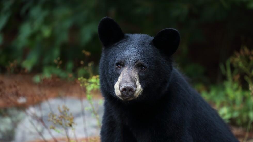 Au Mexique, une enquête ouverte après la castration d'un ours qui reniflait les randonneuses
