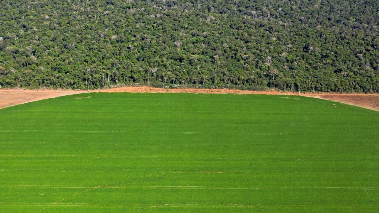 Brésil: malgré le coronavirus, l'insolente santé de l'agronégoce