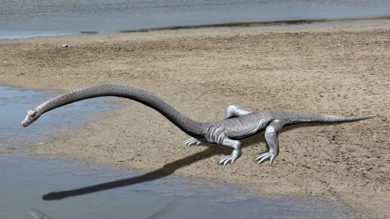 Des scientifiques pensent avoir résolu le mystère d'un reptile du Triassique au cou étrangement long