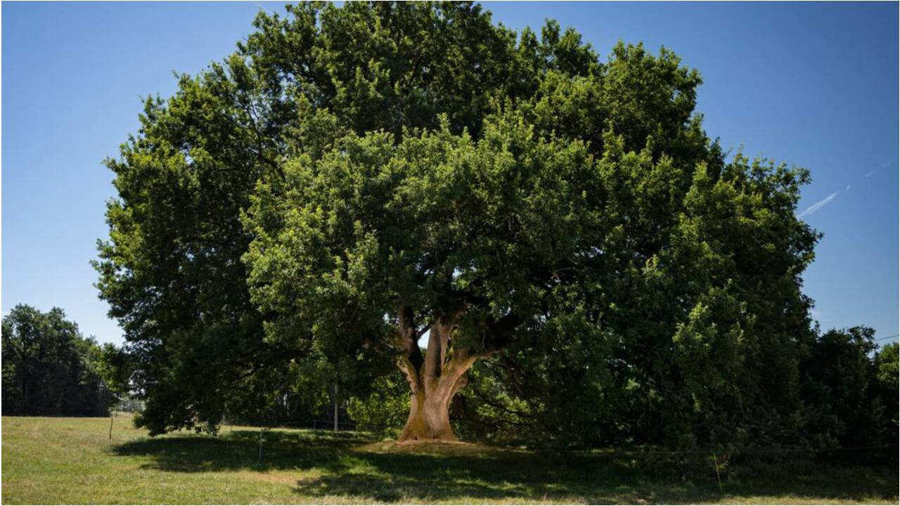 Proposez votre arbre préféré au concours de l'Arbre de l'année 2020