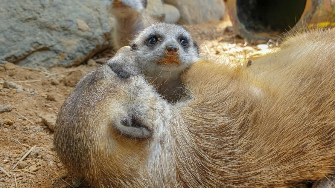 Baby-boom dans un zoo de Colombie à la faveur du confinement